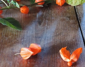 Alchechengi: piccola bacca ricca di vitamina C