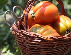 Astuzie e segreti per pomodori al top