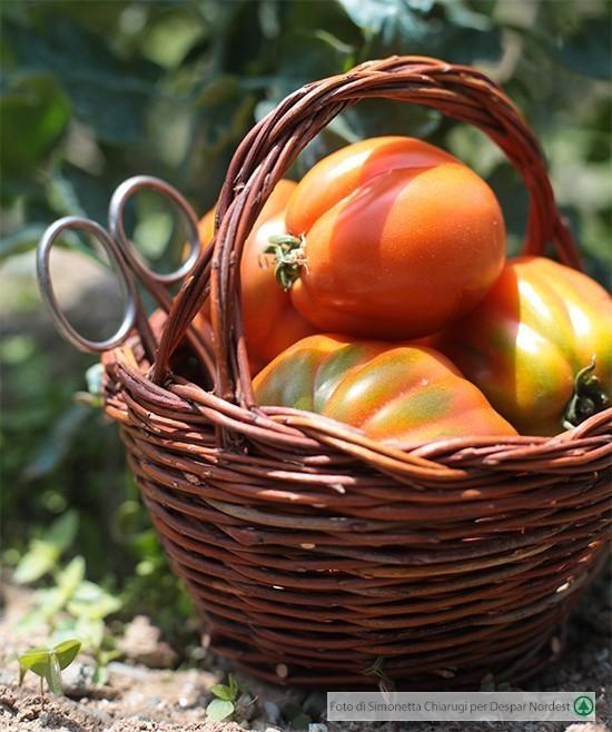 Astuzie e segreti per pomodori al top casa di vita for Cimatura pomodori
