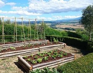 L'ABC dell'orto in famiglia: dal giardino alla tavola