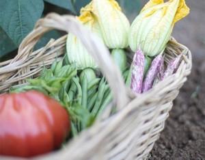 Come coltivare  un orto biodinamico