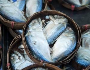 I 9 pesci per l'estate