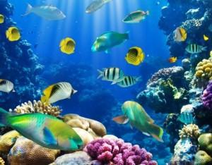 Pesce: a ciascuno la sua stagione