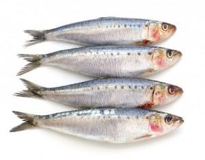 Alla riscoperta dei  pesci dell'estate