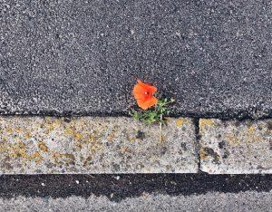 Resilienza: cos'è e come praticarla nella vita quotidiana
