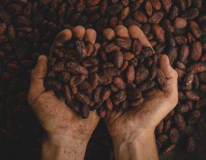 Cioccolato: dalla fava alla tavoletta
