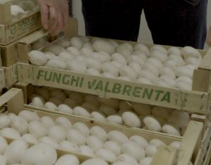 Funghi Valbrenta: quando dalla curiosità nasce la bontà