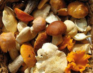 3 ricette veloci con i funghi